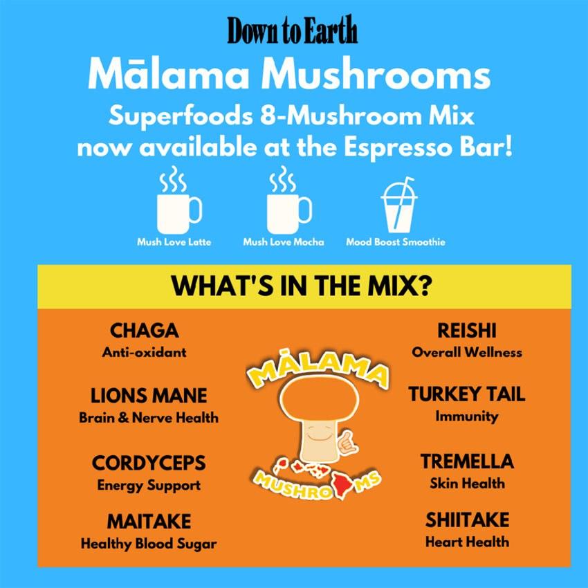 Mushroom Mix Flyer