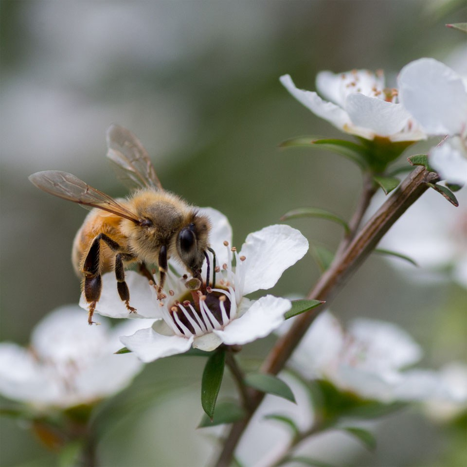 Photo: Bee pollinating a flower