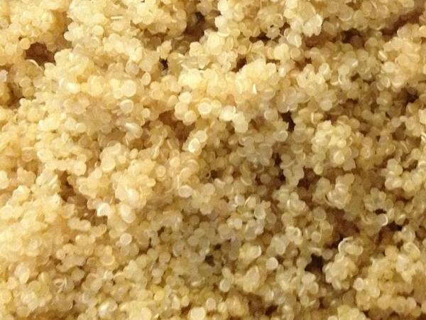 Photo: Sprouted Quinoa