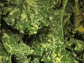 Photo: Italian Kale Chips