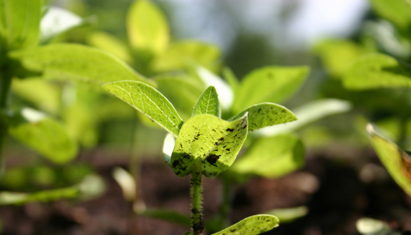 Photo: Seedlings