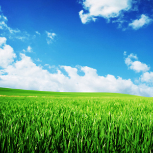 Photo: Green Fields