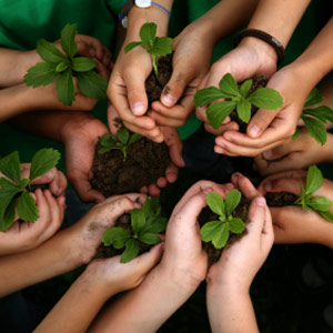 Photo: Hands holding seedlings