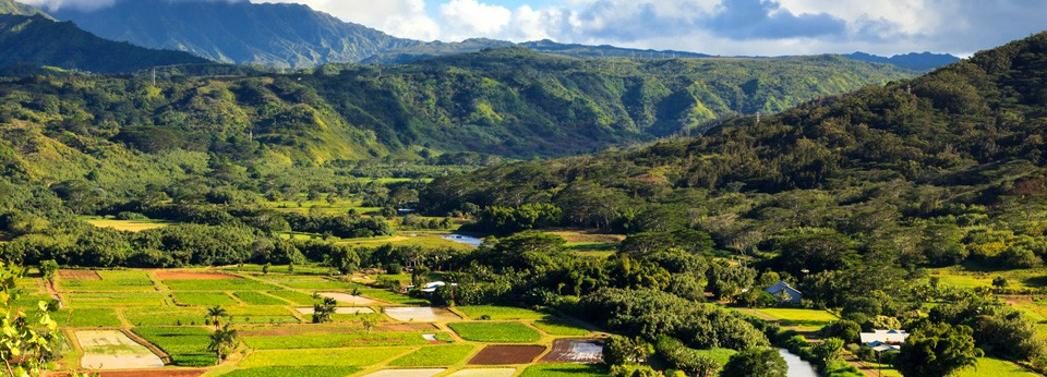 Photo: Hawaii Farms