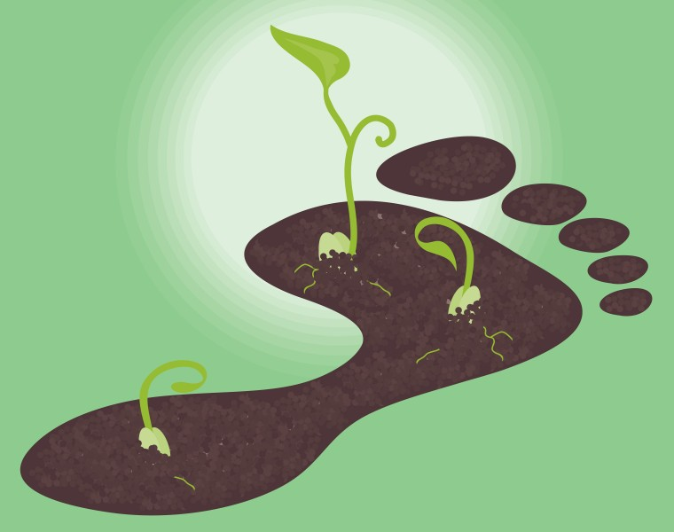Illustration: Carbon Footprint with Seedlings