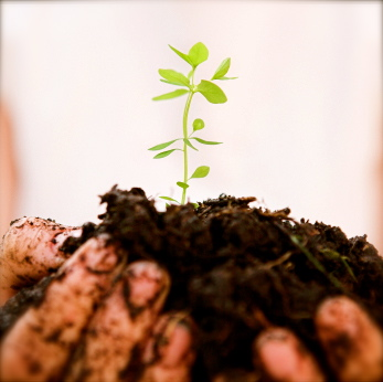 Photo: Person Holding A Seedling in Soil