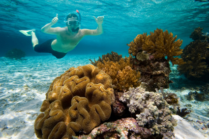 Photo: Person Snorkeling near a Coral Reef